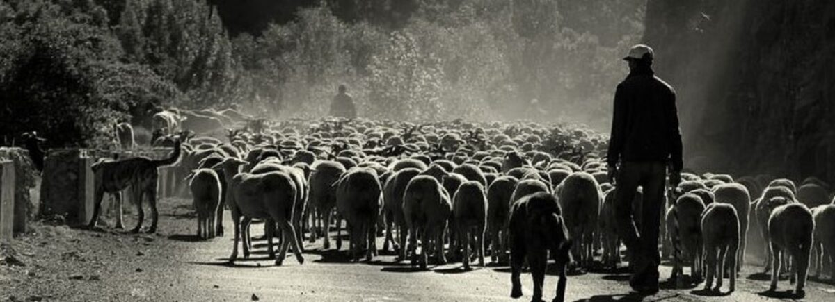 Pastoreo trashumante en Europa