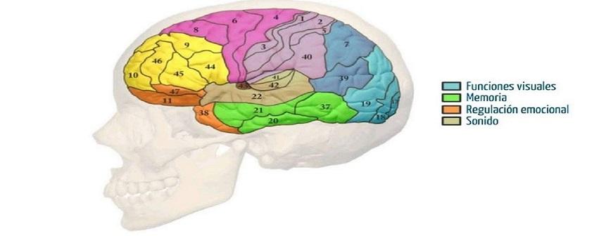 Nos ocupa y preocupa el cerebro: Se  codifican viajes a la memoria